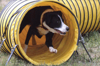 Dog Running Through Tube
