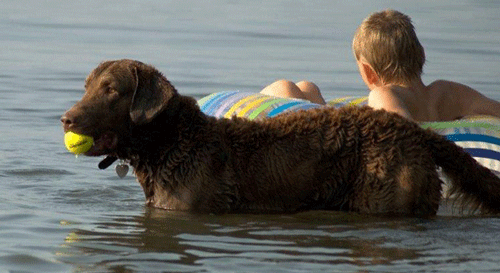 Image of dog and kids swimming at a Pet Friendly Beach